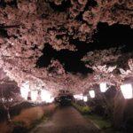 篠山の花見スポット