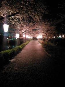 桜1 西紀