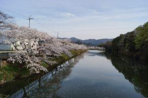 桜 3 西紀